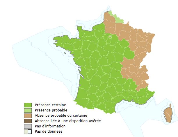 Carte de répartition du frelon asiatique - INPN avril 2015